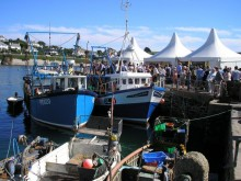 Fish festival 7