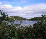 Percuil River
